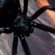 spiderlady87