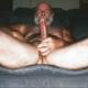 bear46e